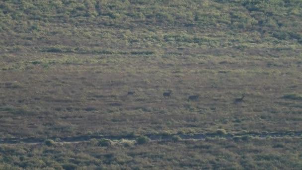 Sorban futó szarvasok nagy csoportja