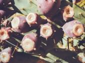 Tüskés körte gyümölcs. Sabres, gyümölcse Opuntia ficus-indica faj kaktuszok, más néven opuntia indiai füge