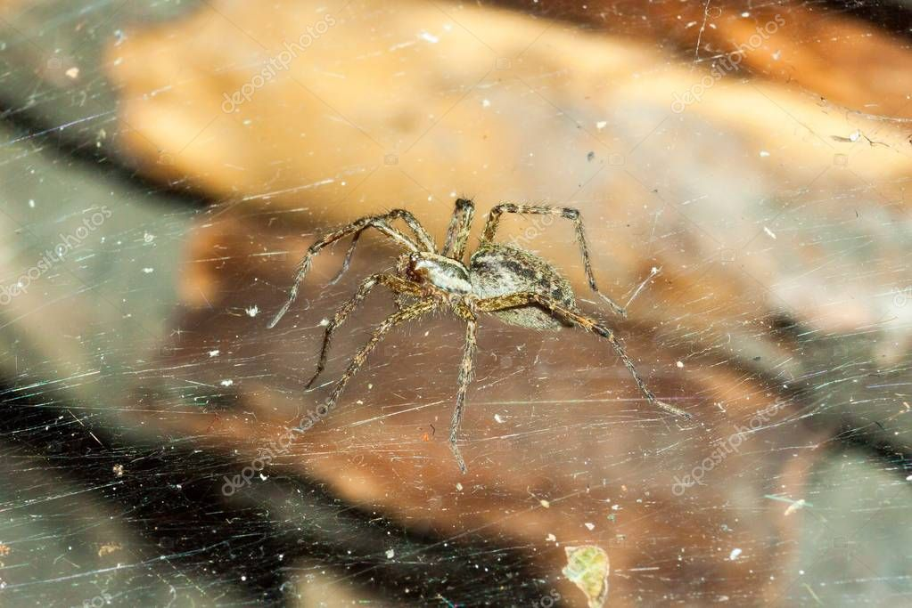 A beautiful little forest spider on a cobweb is a beautiful screen saver, a visual aid.