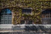 Městská scéna s budovou pokryté zelenými rostlinami v Kodani, Dánsko