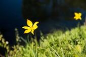 Fotografie blooming