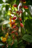Fotografie Selektivní fokus květů se zelenými listy na větvích stromu