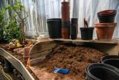 Hrnkové rostliny, květináče a plastové rukou lopatu v půdě v botanické zahradě
