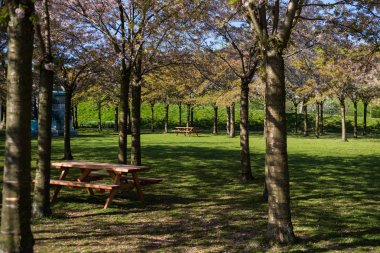 wooden tables and benches between beautiful trees in park, copenhagen, denmark