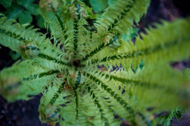 selective focus of beautiful green fern in botanical garden