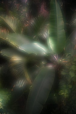 toned picture of palm tree leaves with sunlight in botanical garden