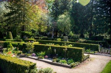 Bushes and trees in botanical garden of Copenhagen, Denmark stock vector