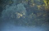 Různých druhů dřevin na slunné mlhavé ráno.
