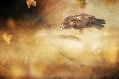 Buzzard on branch in autumn storm. Old master painting style.