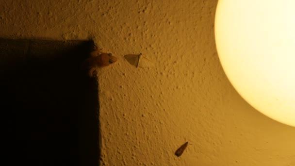 Gecko jagt kleinen Schmetterling und isst