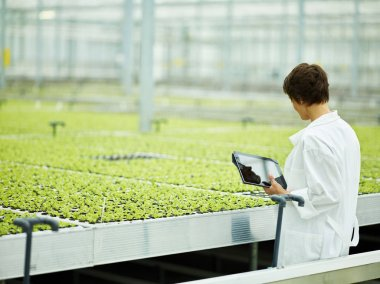 Back view of woman in white gown holding tablet and checking little green seedlings inside of farming plant