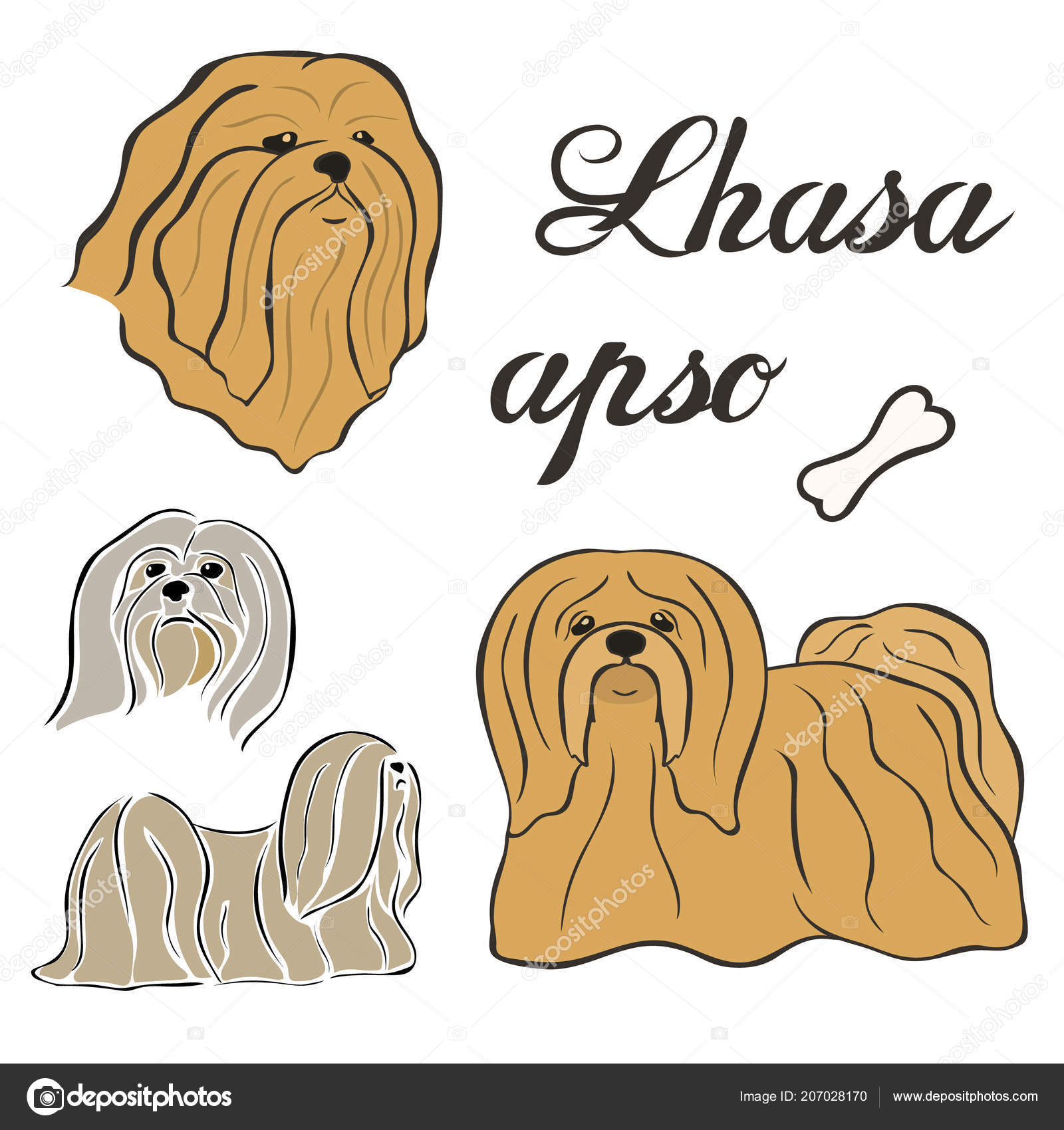 Lhasa Apso Dog Breed Vector Illustration Set Isolated Doggy Image