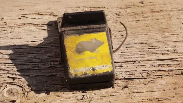 Die Maus tappte in eine Mausefalle. Nur der Schwanz der Maus ist sichtbar.