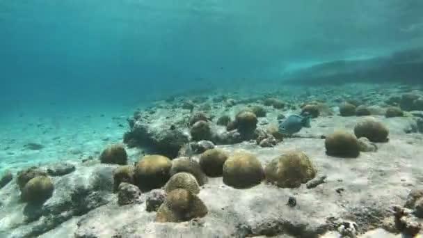 Underwater life on Bonaire, Dutch Antilles