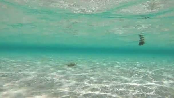 Female legs walking underwater and windsurfer