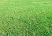green grass use background