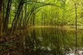 Krajina s krásný zelený les s vodou plné lístečky v pozadí