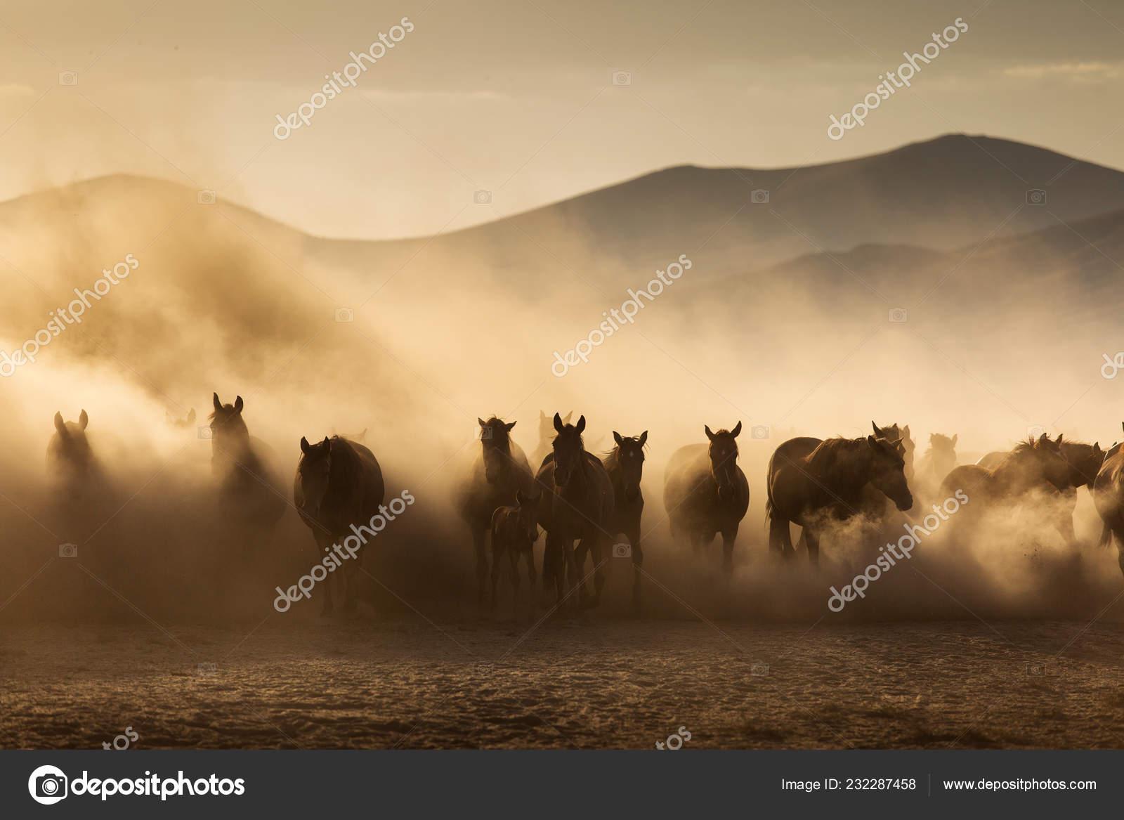 Landscape Wild Horses Running Sunset Dust Background Stock Photo C Danmir12 232287458