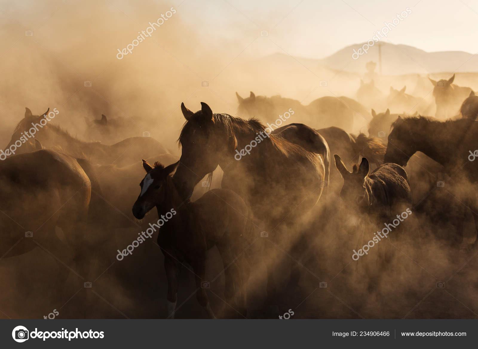 Landscape Wild Horses Running Sunset Dust Background Stock Photo C Danmir12 234906466