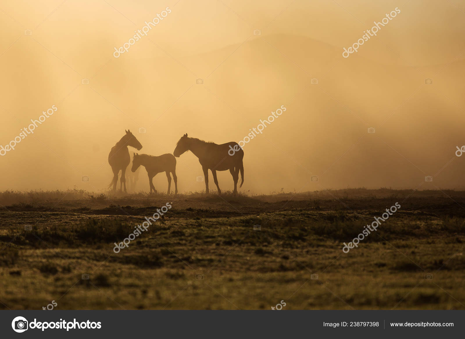 Wild Horses Running Sunset Landscape Wild Horses Running Sunset Dust Background Stock Photo C Danmir12 238797398
