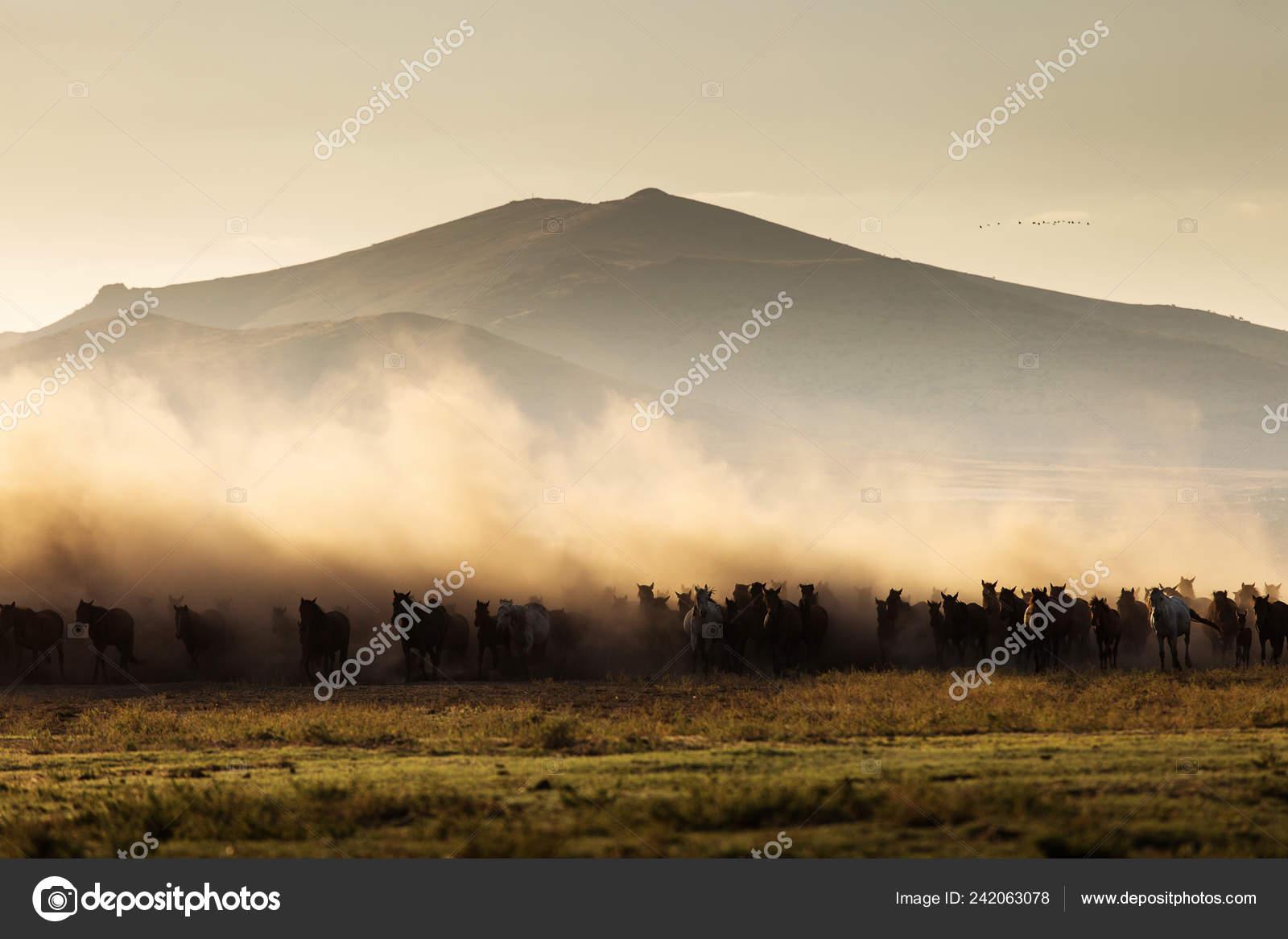Landscape Wild Horses Running Sunset Dust Background Stock Photo C Danmir12 242063078