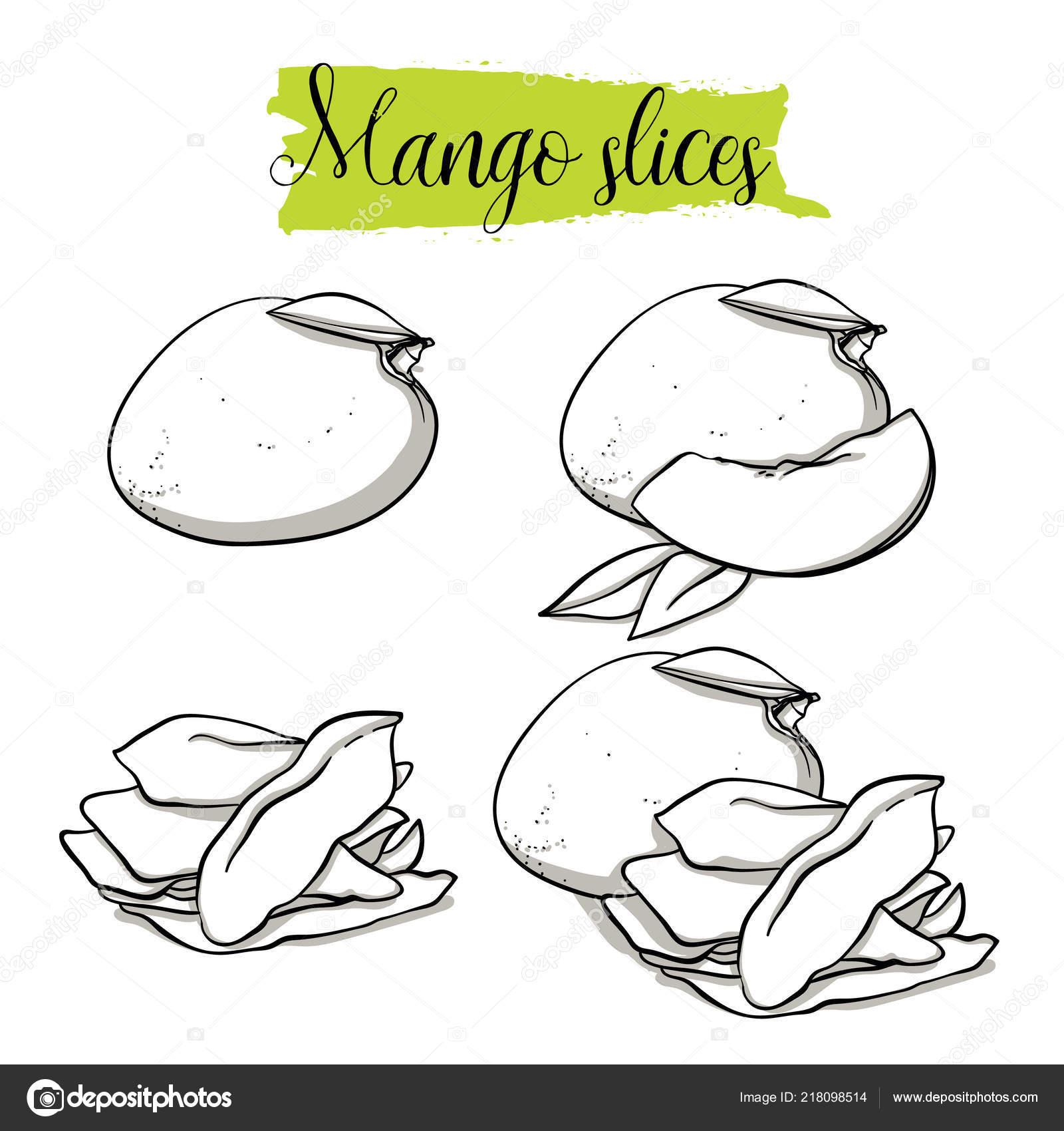 Hand Drawn Sketch Style Mango Set Single Group Fruits Dried