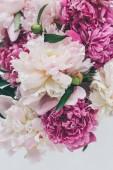 pohled shora krásná růžová Pivoňka květiny pozadí