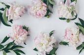 Fotografie Draufsicht der Rahmen mit leichten Rosa Pfingstrose Blumen mit Blättern auf weiß