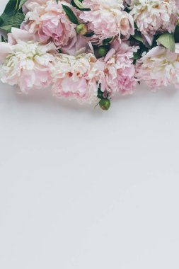 top view of light pink peony flowers on white with copy space