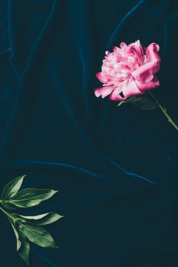top view of one pink peony flower on dark cloth