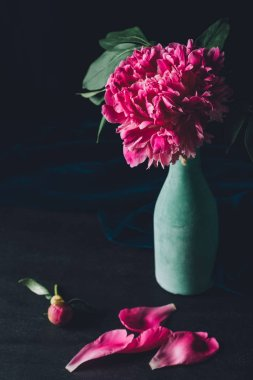 pink peony flower in vase with petals on dark background