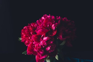 pink peony bouquet, isolated on black