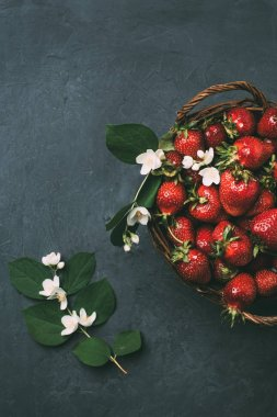 top view of beautiful jasmine flowers and fresh ripe strawberries in basket on black