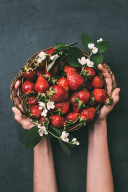 cropped shot of person holding basket with fresh ripe strawberries and jasmine flowers