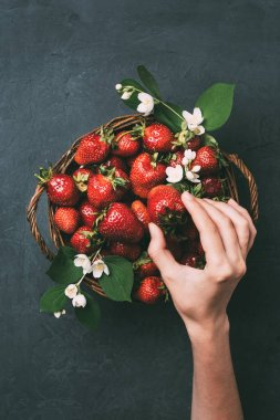 cropped shot of human hand and fresh ripe strawberries in basket