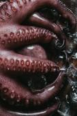 Fotografie pohled shora velké syrové chobotnice s kostkami ledu