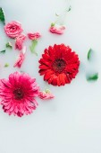 Fotografie top view of beautiful roses and gerbera flowers with green leaves in milk backdrop