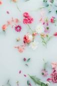 pohled shora z různých krásných barevných květin v pozadí mléka
