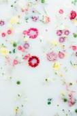 felülnézet különböző szép virágok tej háttér
