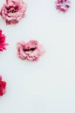 top view of beautiful roses, chrysanthemum and gerbera flowers in milk backdrop