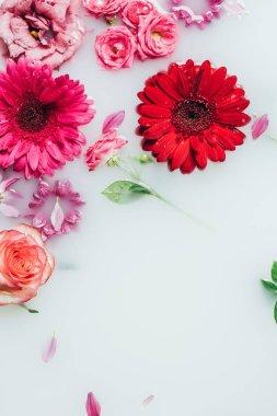 top view of colorful roses, gerbera and chrysanthemum flowers in milk