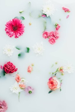 Top view of various beautiful colorful flowers in milk background stock vector