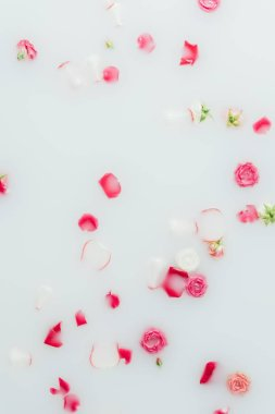 top view of beautiful pink roses and petals in milk background