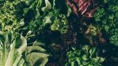 Fotografie pohled shora různých listové zeleniny a bylin na stole