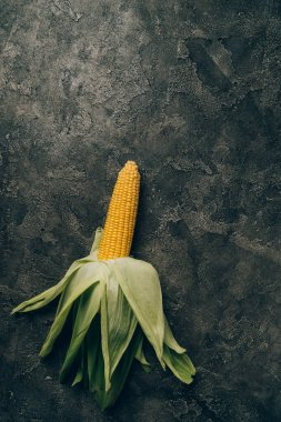 top view of one ripe corn on grey dark table
