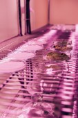 selective focus of various leaves in petri dishes in agro laboratory with ultra violet light
