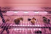 Fotografie pohled z různých listů v Petriho miskách v agro laboratoř s ultra violet světla na plochu