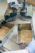Fotografie Oříznout obrázek vědec, který pracuje s zrna v laboratoři agro