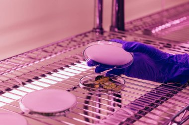 Cropped image of scientist closing petri dish with leaves in agro laboratory with ultra violet light stock vector