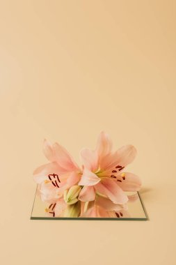 Lily flowers on mirror on beige table stock vector